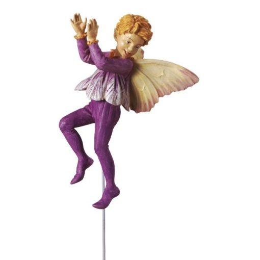 Crocus fairy boy